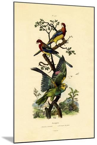 Yellow-Headed Parrot, 1833-39--Mounted Giclee Print
