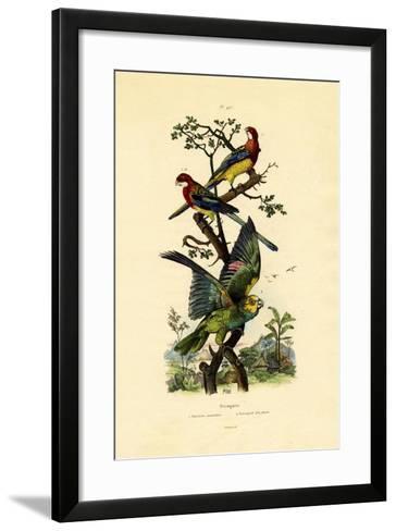 Yellow-Headed Parrot, 1833-39--Framed Art Print