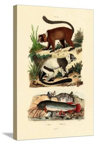 Ring-Tailed Lemurs, 1833-39--Stretched Canvas Print