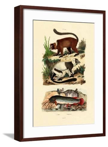 Ring-Tailed Lemurs, 1833-39--Framed Art Print