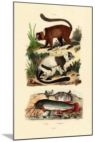 Ring-Tailed Lemurs, 1833-39--Mounted Giclee Print