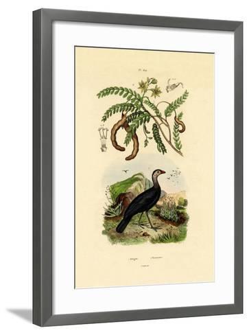 Australian Bush Turkey, 1833-39--Framed Art Print