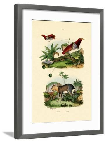 Bird of Paradise, 1833-39--Framed Art Print
