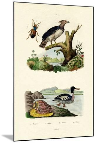 Red-Breasted Merganser, 1833-39--Mounted Giclee Print