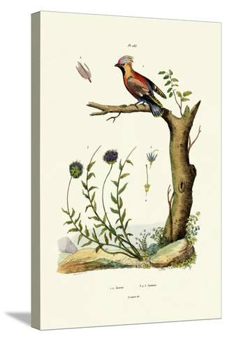 Bohemian Waxwing, 1833-39--Stretched Canvas Print