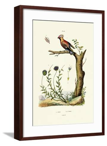 Bohemian Waxwing, 1833-39--Framed Art Print