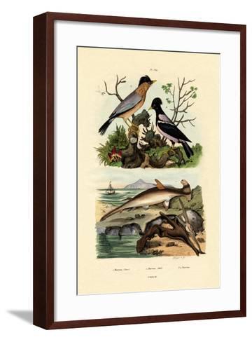 Hammerhead Shark, 1833-39--Framed Art Print
