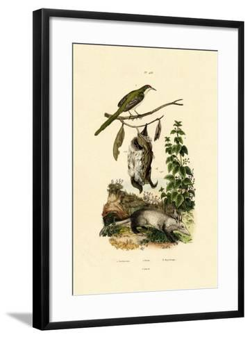 Common Tailorbird, 1833-39--Framed Art Print