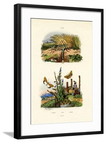 Fall Webworm Moth, 1833-39--Framed Art Print