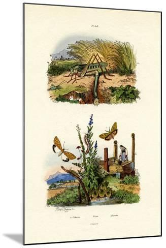 Fall Webworm Moth, 1833-39--Mounted Giclee Print