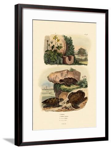 Greater Celandine, 1833-39--Framed Art Print