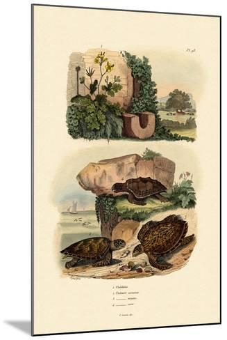 Greater Celandine, 1833-39--Mounted Giclee Print