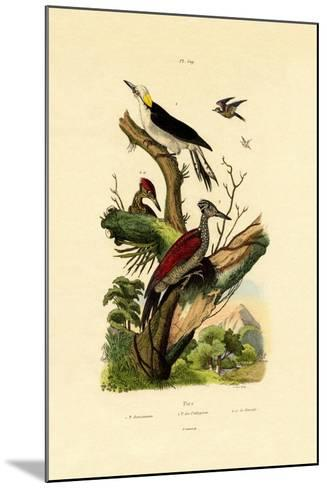 Greater Flameback, 1833-39--Mounted Giclee Print