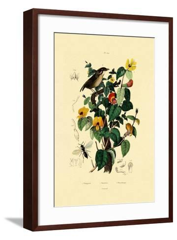 Handsome Flat Pea, 1833-39--Framed Art Print