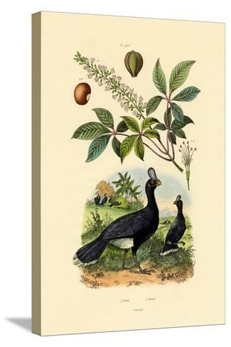 Helmeted Curassow, 1833-39--Stretched Canvas Print