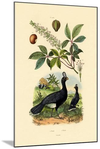 Helmeted Curassow, 1833-39--Mounted Giclee Print