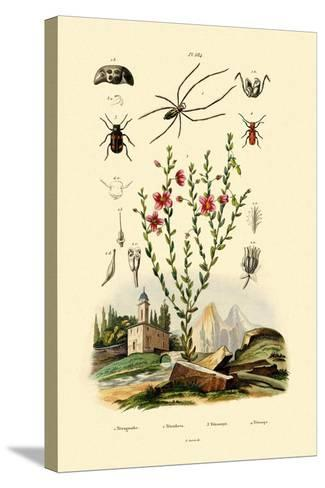 Long-Jawed Spider, 1833-39--Stretched Canvas Print