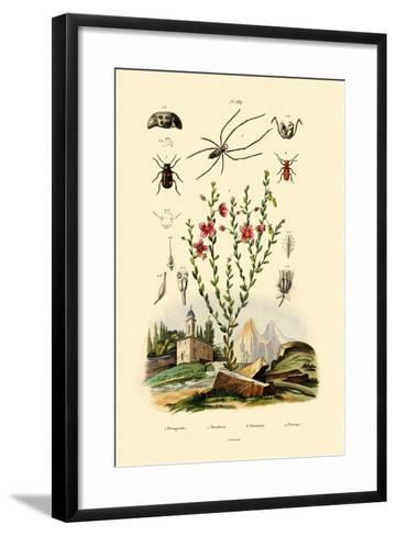 Long-Jawed Spider, 1833-39--Framed Art Print