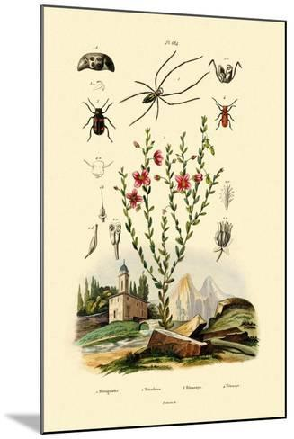 Long-Jawed Spider, 1833-39--Mounted Giclee Print