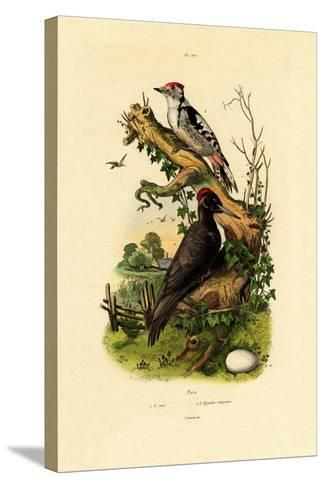Greater Spotted Woodpecker, 1833-39--Stretched Canvas Print