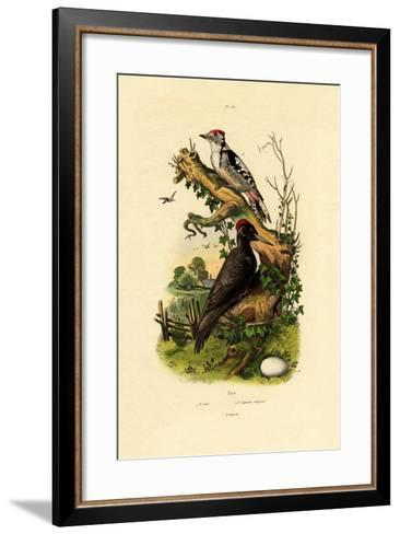 Greater Spotted Woodpecker, 1833-39--Framed Art Print