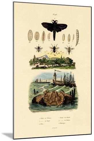 Dark Giant Horsefly, 1833-39--Mounted Giclee Print