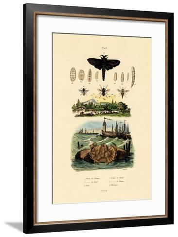 Dark Giant Horsefly, 1833-39--Framed Art Print