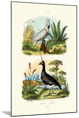 Umbrella Cockatoo, 1833-39--Mounted Giclee Print