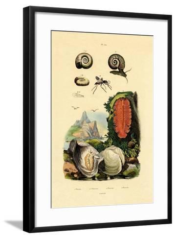 Window Pane Shell, 1833-39--Framed Art Print