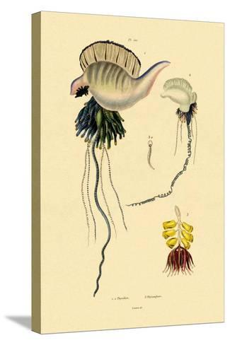 Portuguese Man-Of-War, 1833-39--Stretched Canvas Print