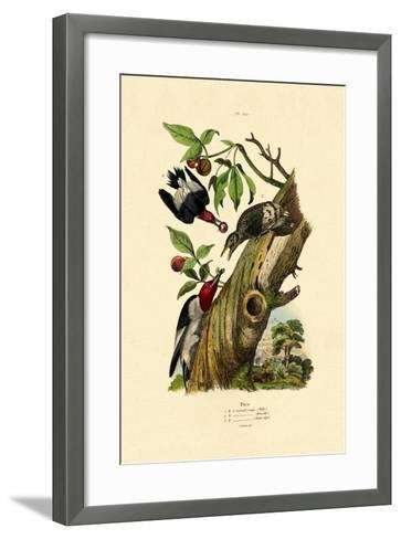Red-Headed Woodpecker, 1833-39--Framed Art Print