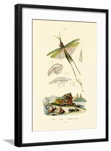 Slant-Faced Grasshopper, 1833-39--Framed Art Print