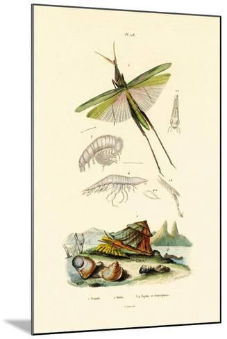 Slant-Faced Grasshopper, 1833-39--Mounted Giclee Print