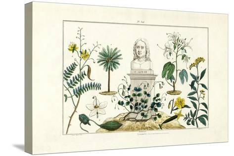 Carl Von Linnée, 1833-39--Stretched Canvas Print