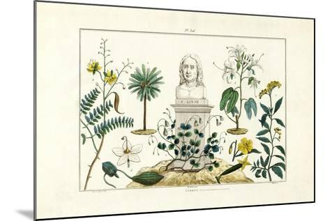 Carl Von Linnée, 1833-39--Mounted Giclee Print