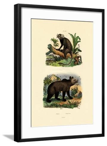 Common Marmoset, 1833-39--Framed Art Print