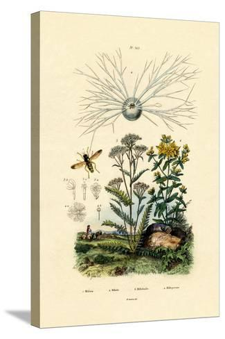 Yellowjacket Hoover Fly, 1833-39--Stretched Canvas Print