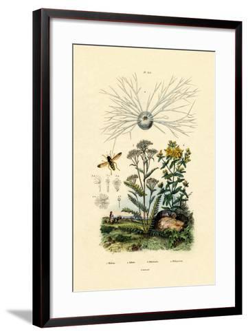 Yellowjacket Hoover Fly, 1833-39--Framed Art Print