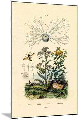 Yellowjacket Hoover Fly, 1833-39--Mounted Giclee Print