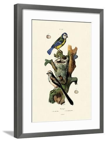 Long-Tailed Tit, 1833-39--Framed Art Print
