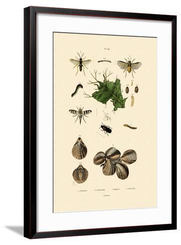 Mealworm Beetle, 1833-39--Framed Art Print