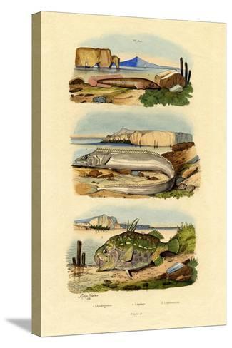 Shore Clingfish, 1833-39--Stretched Canvas Print