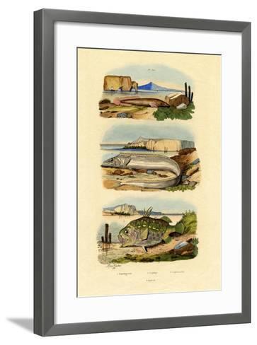 Shore Clingfish, 1833-39--Framed Art Print