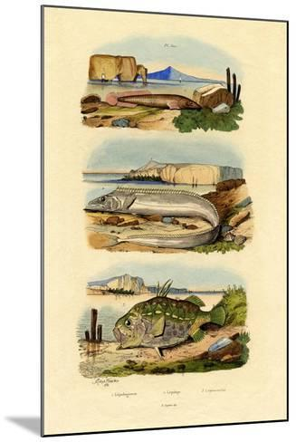 Shore Clingfish, 1833-39--Mounted Giclee Print