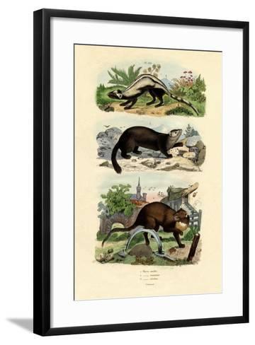 Striped Polecat, 1833-39--Framed Art Print