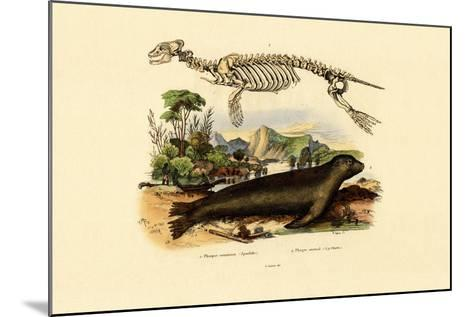 Cape Fur Seal, 1833-39--Mounted Giclee Print