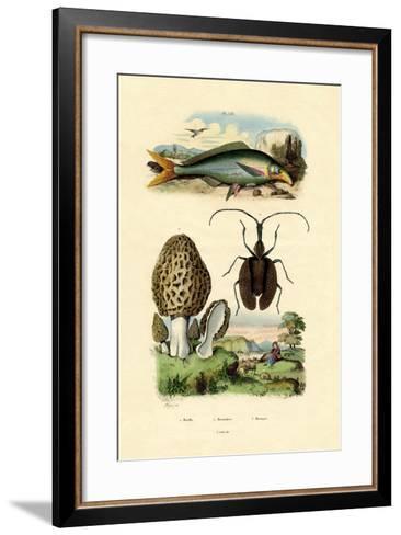 Eatable Morel, 1833-39--Framed Art Print