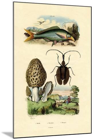Eatable Morel, 1833-39--Mounted Giclee Print