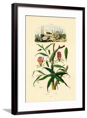 Gloriosa Lily, 1833-39--Framed Art Print
