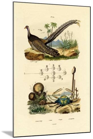 Argus Pheasant, 1833-39--Mounted Giclee Print